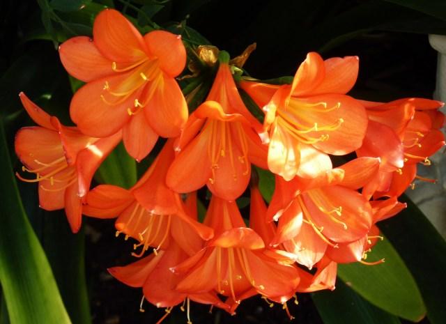 Taken at the Tropical House at Kew Gardens, London