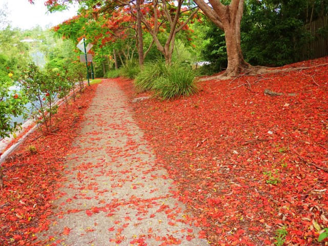 Red petals everywhere.