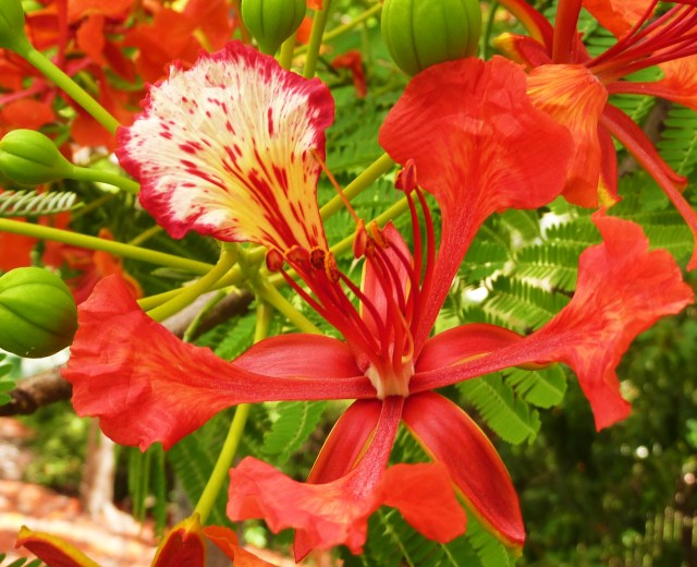 The flower has 4 plain elongated petals and the colourful fifth is known as the standard.